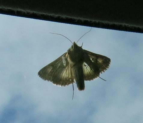 Moth, Sept 17, 2013.