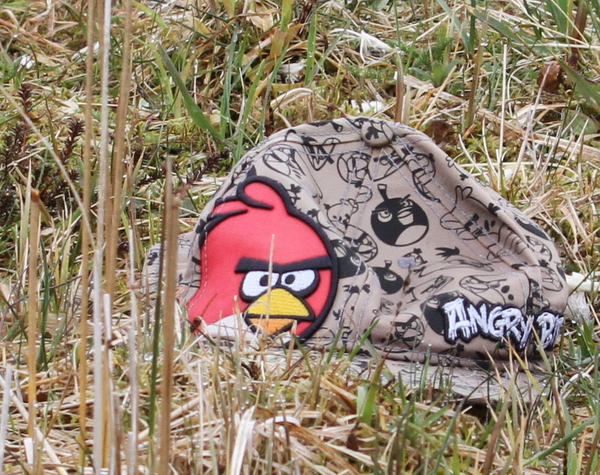 Angry Bird, near Palisades Lake, May 19, 2015