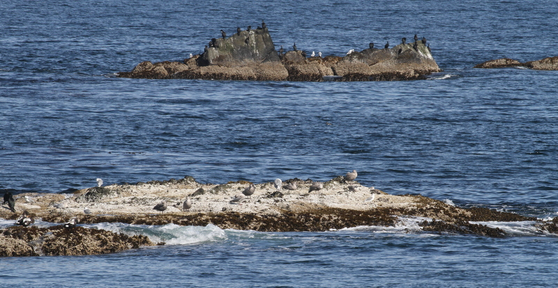 Goose Rocks and Cormorant Rocks, Seawall, Sept 22, 2015.