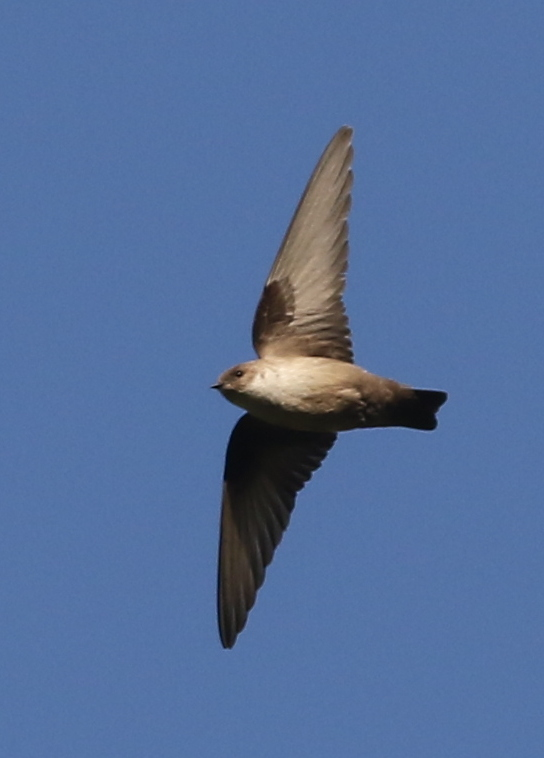 Crag Martin, Leuk, Switzerland, June 26, 2016