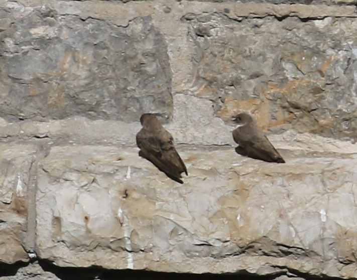 Crag Martins, Doux Valley, France, June 24,2016