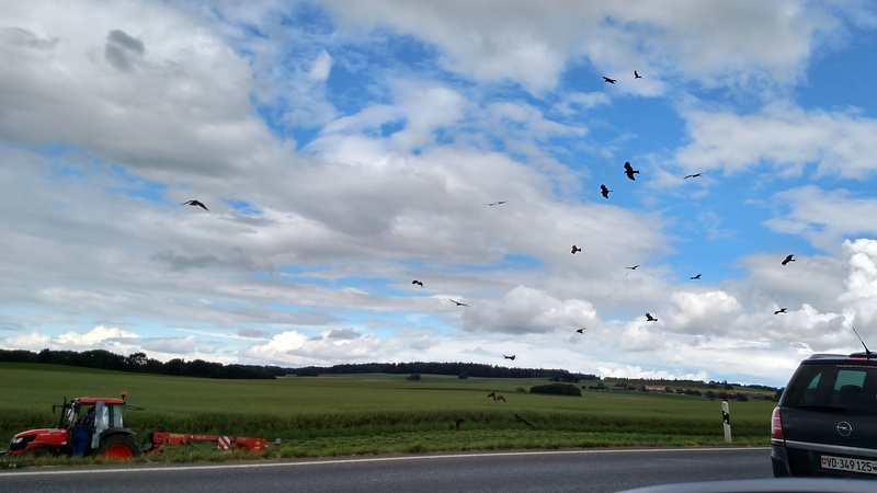 Kites, near Cugy, June 19, 2016